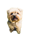 terrier-1851108_1920-removebg-preview.png