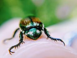 Beetle butt.