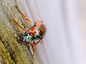 Beetles enjoy eating all kinds of poop.