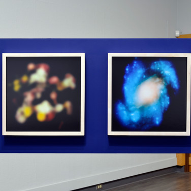 Blurry Chysanthemums and Blurry Hubble Image