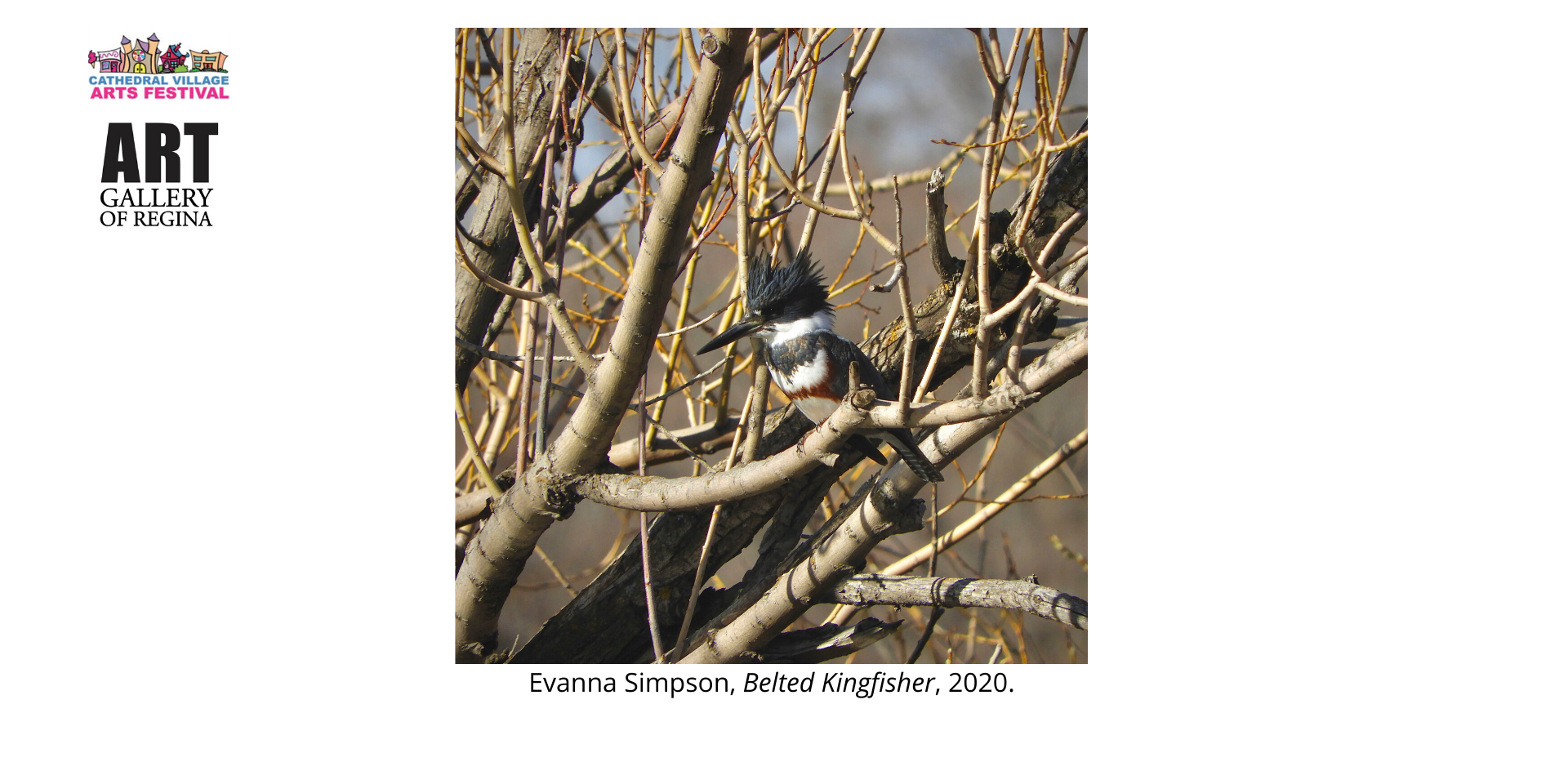 Evanna Simpson,Belted Kingfisher, 2020.
