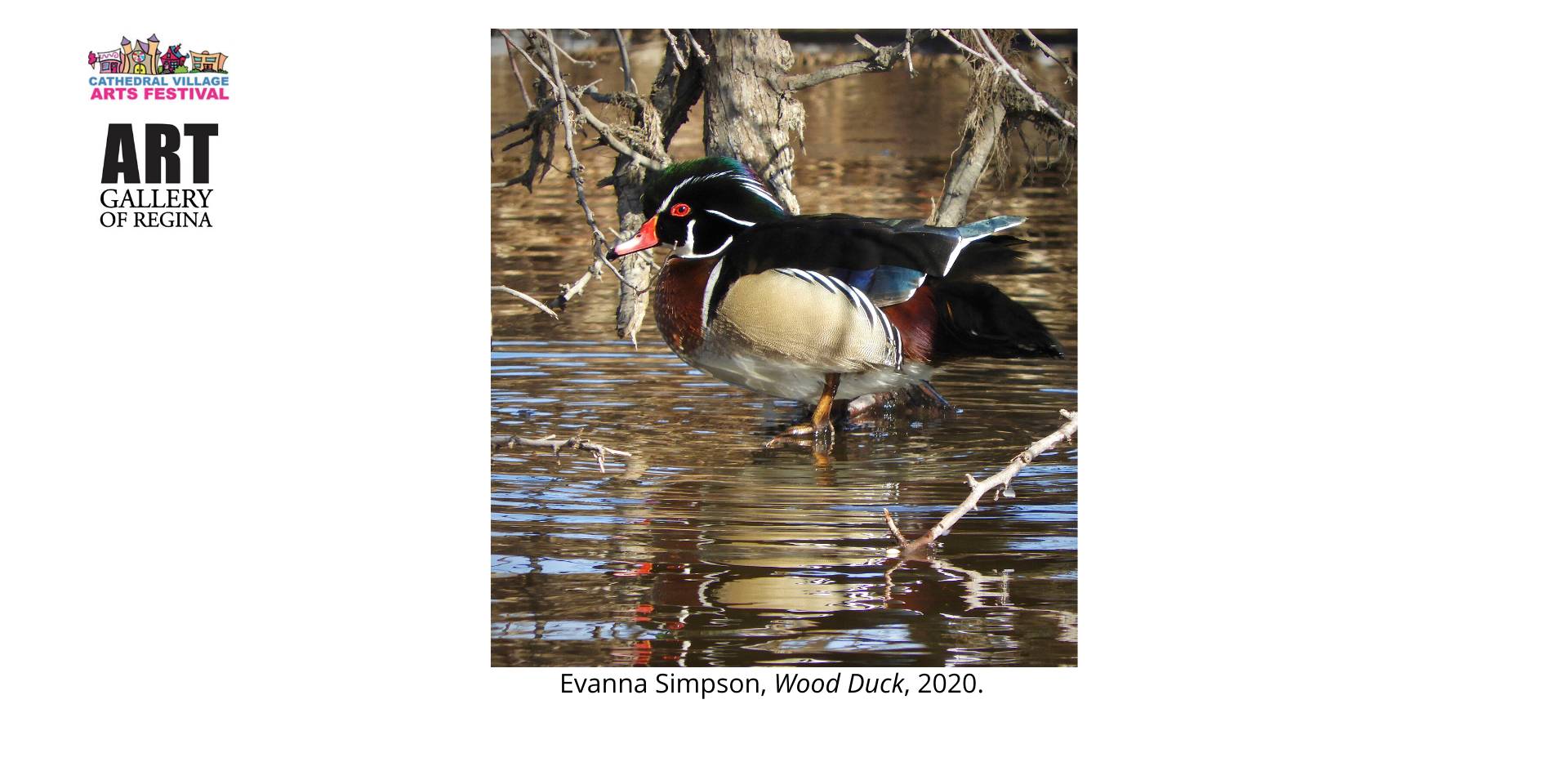 Evanna Simpson, Wood Duck, 2020.