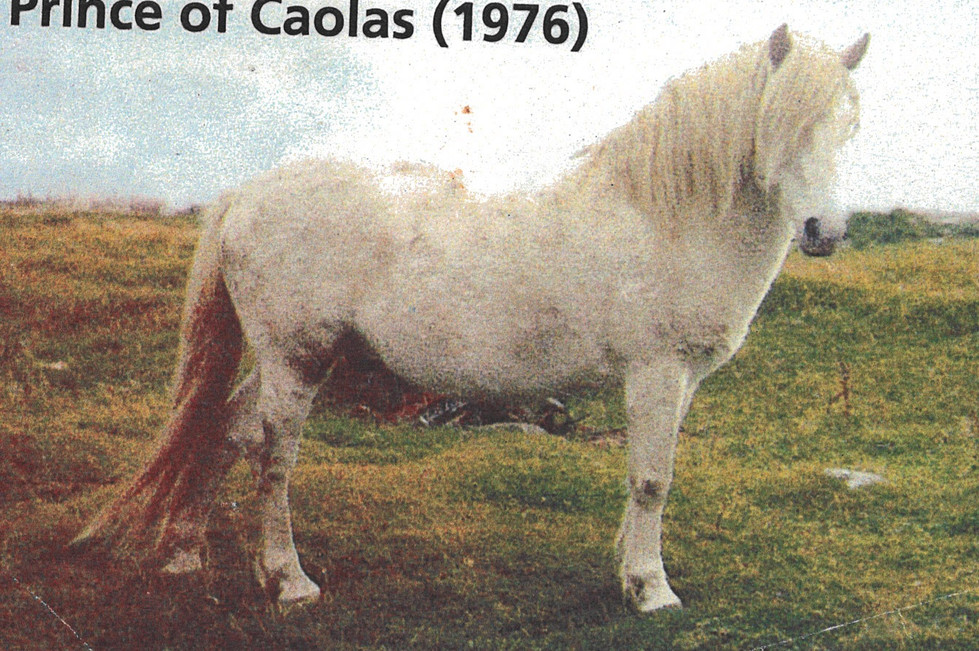 Prince of Caolas