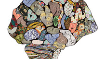 Why Can't I Think My Way Out Of This? A User-Friendly Introduction to Your Triune Brain