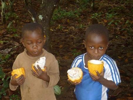 Empowering the Cocoa Farmer