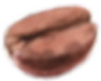Coffee_Bean 3_small.png