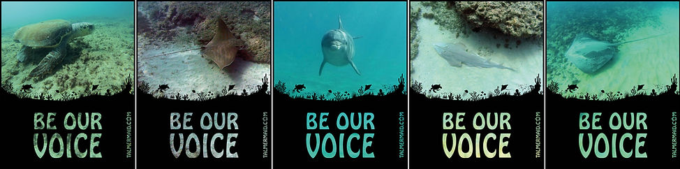 Be Our Voice