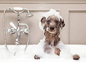 Ein Bad reinig und fördert den Fellwechsel