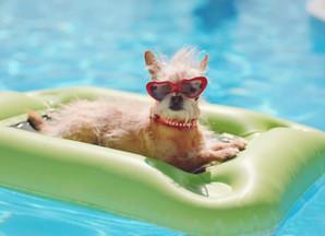 Sommer & Sonne & Hundstage