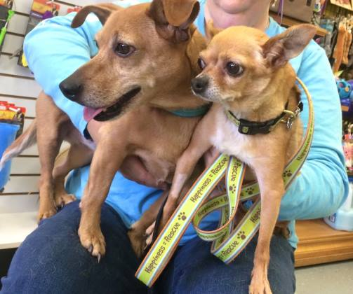 3 scrapy and sandy adopt