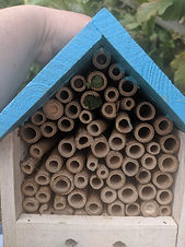 bug house.jpg