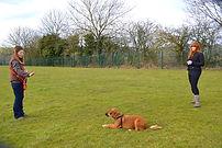 Dog Training, Love Walkies, Rachel Trafford