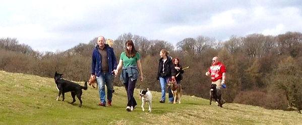Dog Walking, Dog Training