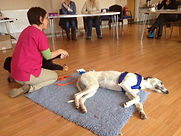Dog First Aid, Dog Courses, Dog Training