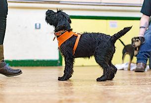 Dog Training, Puppy Training, Puppies