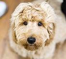Dog Training Leek, Puppy Training, Puppy, Cute Puppy, Reactive Dog