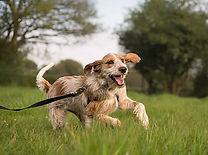 Dog Walking, Dog Fun, Puppy Fun, Dog Training, Love Walkies