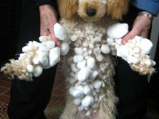 Dogs & Snow