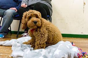 Puppy Training, Dog Training, Puppies