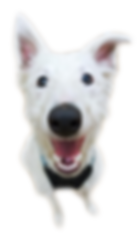 Funny Dog, Happy Dog, Smiling Dog