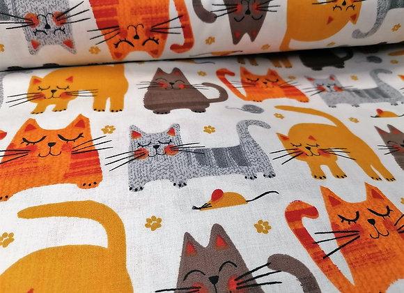 Cotone Cat cartoons