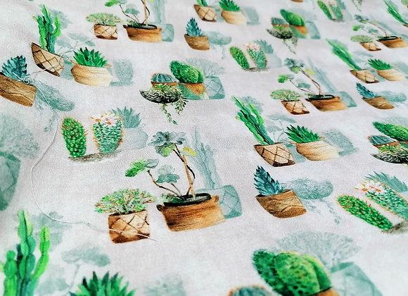 Cotone Cactus Shadows