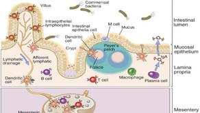De huid in relatie tot de darmen