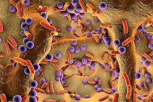 2019 HUID-DARM afbeelding microben.jpg