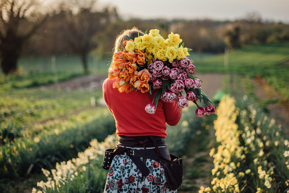 Wildling_Blumen_Blumenversand_blumenfeld_tulpen_flowerfarm