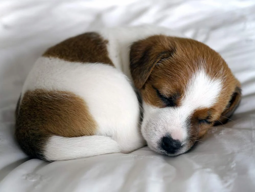 6-facts-to-know-before-owning-a-puppy.we