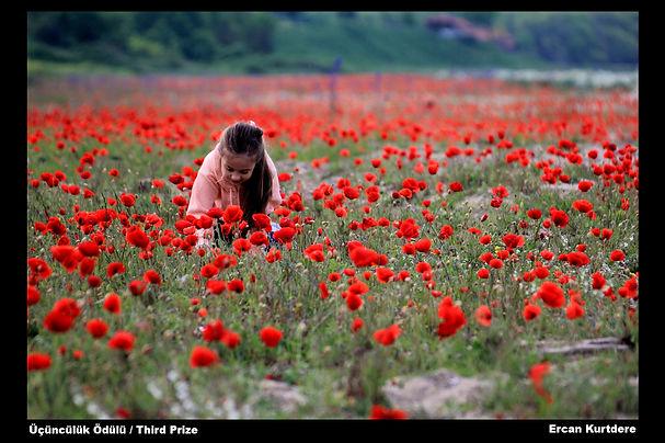 dogay_2011_ercan_kurtdere_yerel_yasam_uc