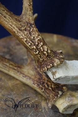 Detail of Replica Rack