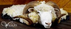 Merino Sheep Rug