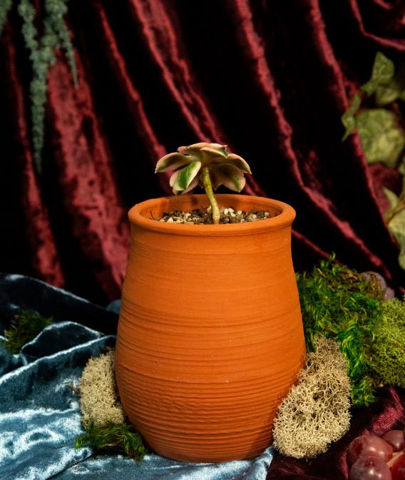 Terracotta Succulent Pot Back