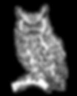 owl-illustration-clipart.png
