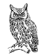 owl-illustration-clipart.png
