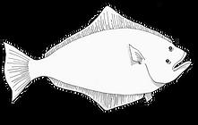 halibut.png