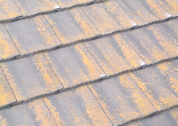 屋根:藻・苔の付着