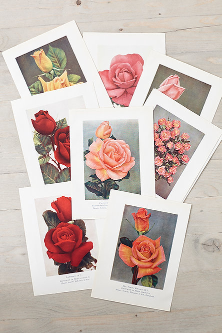 OK4938 - A Bunch of Roses