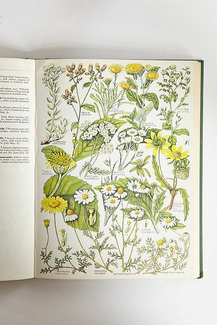 OK5193 - The Concise British Flora in Colour