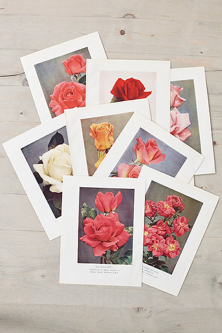 OK4937 - A Bunch of Roses