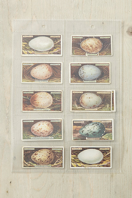OK5110 - Birds Egg Cards