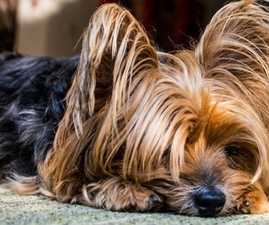 Gastrointestinal problems in Dogs 1