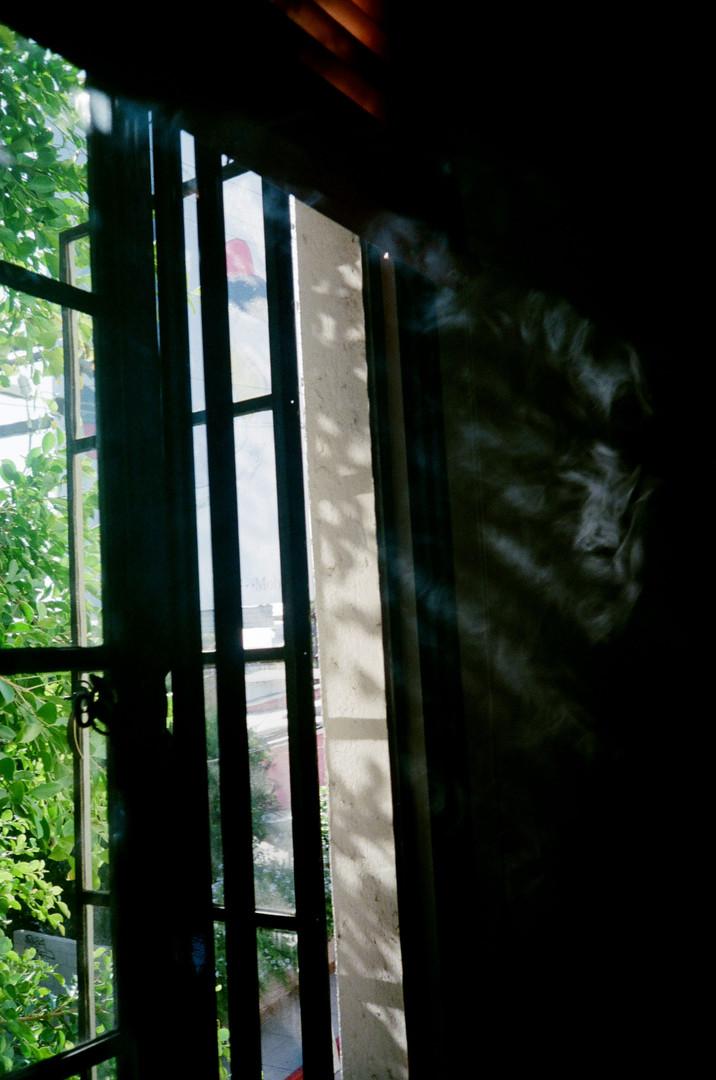 SMOKE OUT WINDOW_ FALL 19.jpg