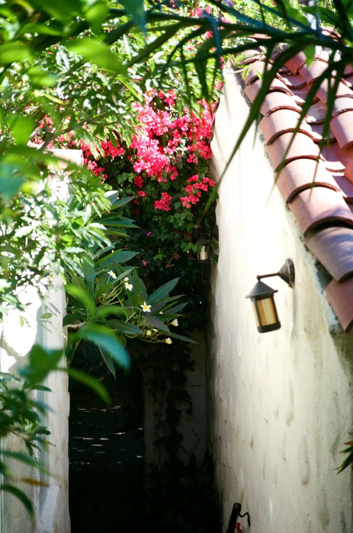 CHATEAU FLOWERS_FALL 20.jpg