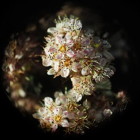 Flower Galery