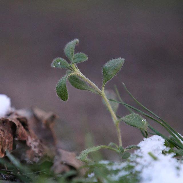 Tough Sprout