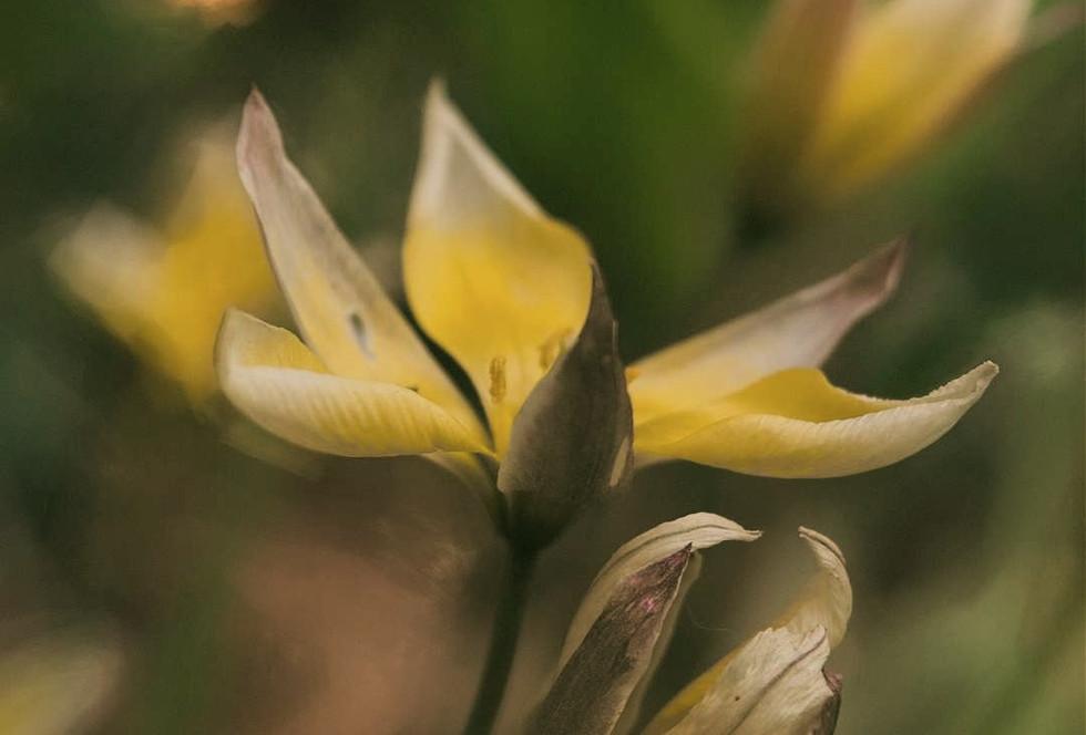Painterly Flower Portrait
