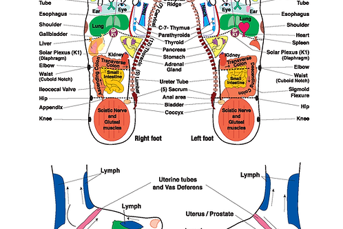 """Integrative Reflexology® 8.5""""x 11"""" Foot Chart"""