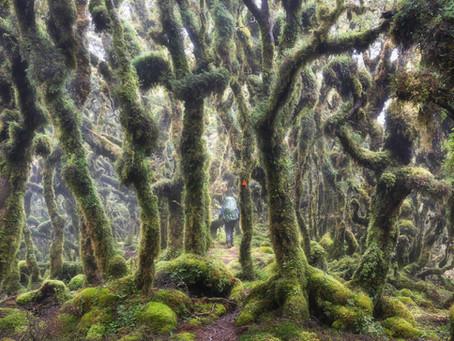 Te Araroa, časť 2. - V lese